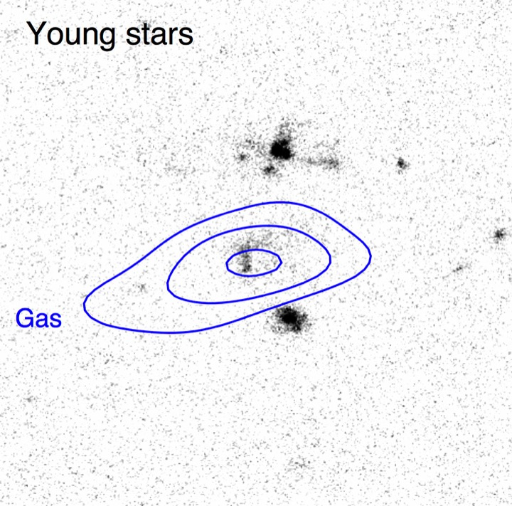 ALMA/HST young stars